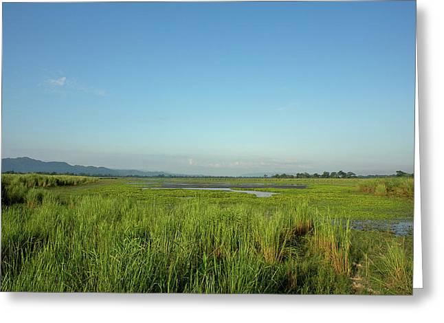 Clear Skies Over A Marsh In Kaziranga Greeting Card
