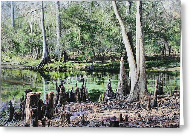 Clear Skies Over Manatee Springs Greeting Card by Richard Barone
