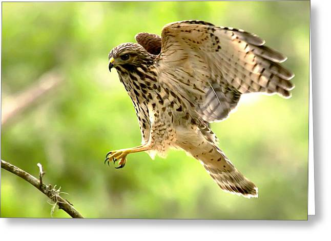Cleared For Landing Greeting Card