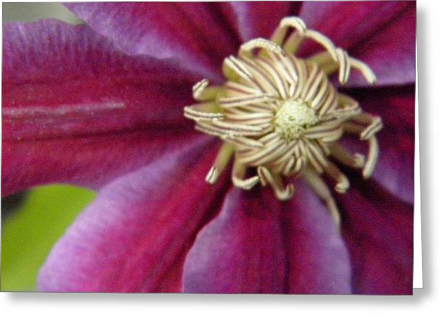 Clematis Greeting Card by Marijo Fasano