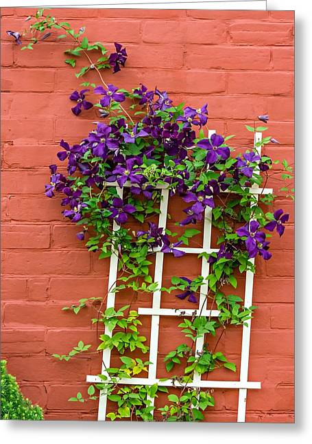 Clematis Greeting Card