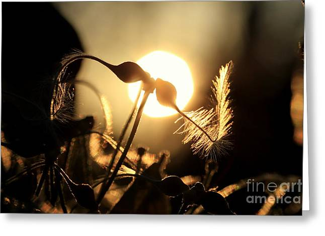 Clematis - Sunset Greeting Card by Kenny Glotfelty