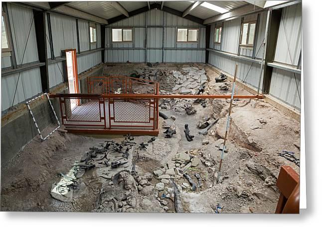Cleveland-lloyd Dinosaur Quarry Fossils Greeting Card by Jim West