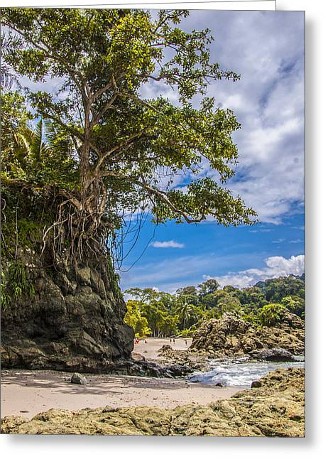 Cliff Diving Tree Greeting Card