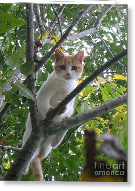 Climbing Kitty Greeting Card