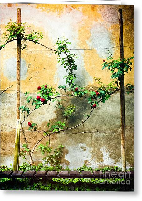 Greeting Card featuring the photograph Climbing Rose Plant by Silvia Ganora