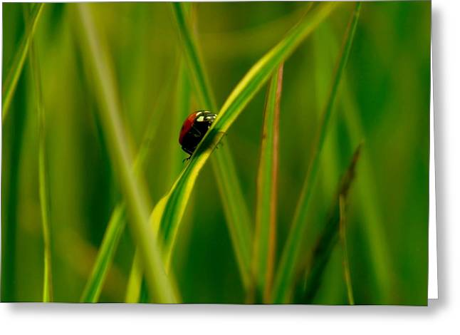 Climbing Up The Long Green Road Greeting Card by Jeff Swan