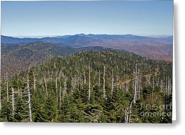 Clingmans Dome Autumn Greeting Card