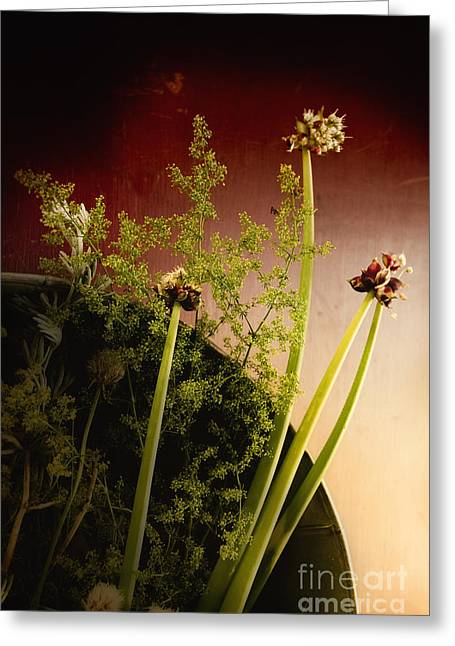 Clipped Stems Greeting Card by Margie Hurwich