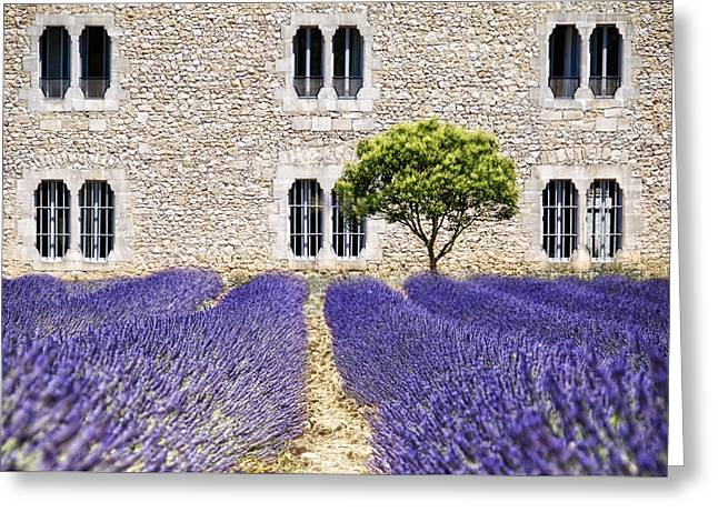 Cloister-lavender Greeting Card