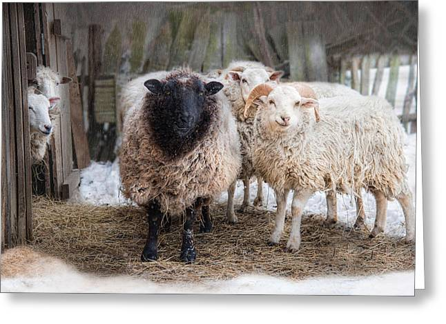 Close Knit Greeting Card by Robin-Lee Vieira