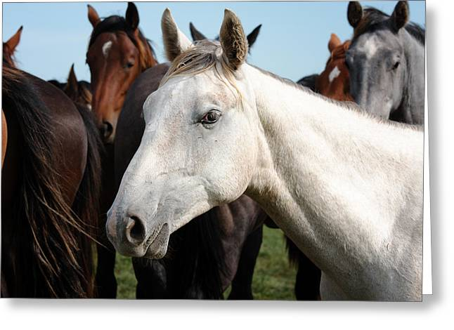 Close-up Herd Of Horses. Greeting Card
