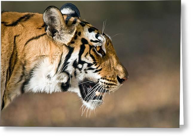 Close-up Of A Bengal Tiger Panthera Greeting Card by Panoramic Images