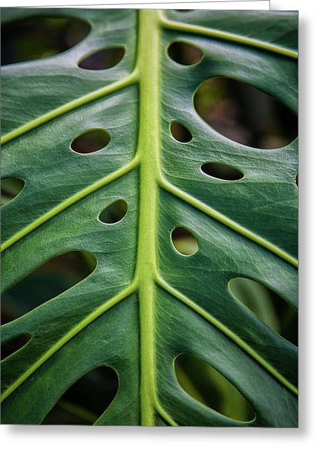 Close Up Of A Green Leaf With Holes Greeting Card by Scott Mead