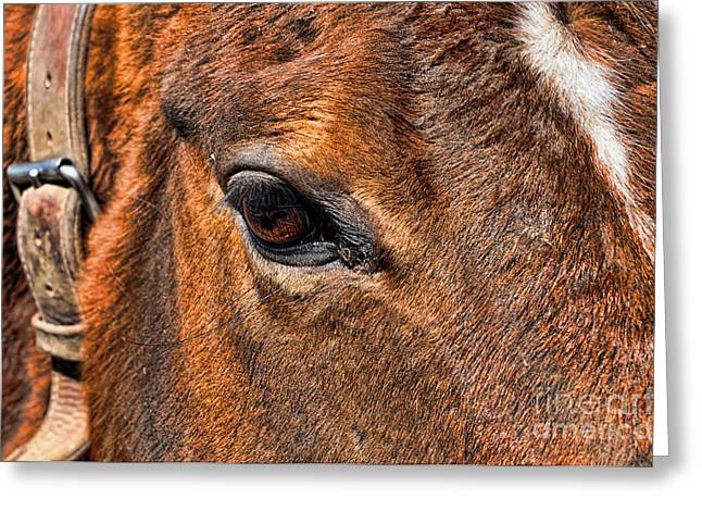 Close Up Of A Horse Eye Greeting Card by Paul Ward