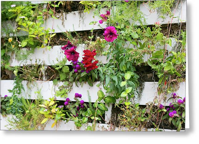 Close Up Of A Living Wall Greeting Card by Julien Mcroberts