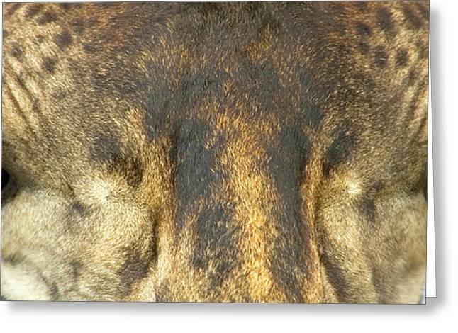 Close-up Of A Maasai Giraffes Eyes Greeting Card