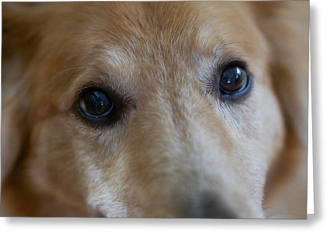 Close Up Of A Pet Dogs Eyes Greeting Card