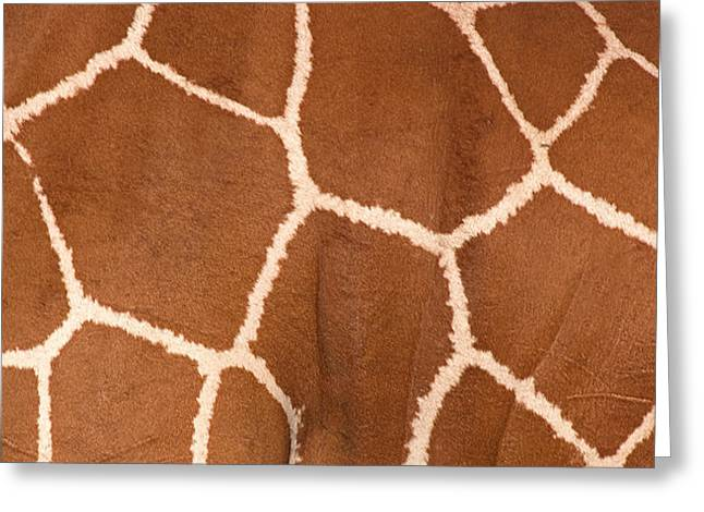 Close-up Of A Reticulated Giraffe Greeting Card by Panoramic Images