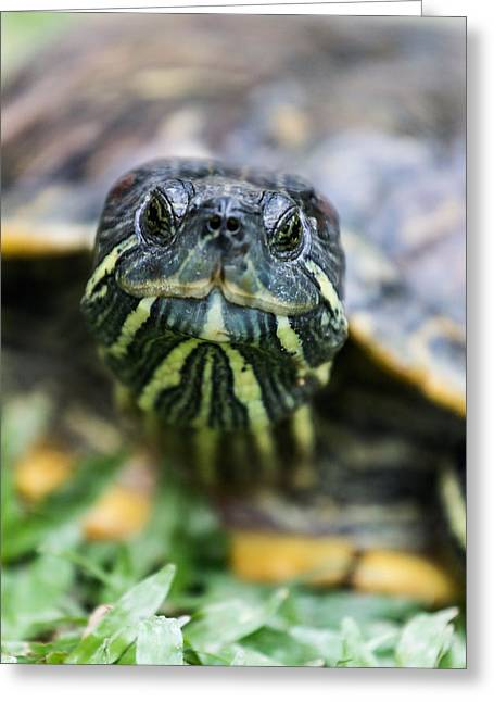 Close-up Of A Turtle Greeting Card