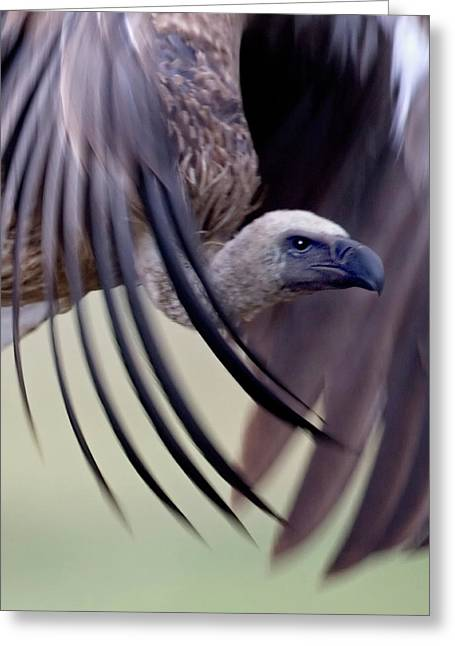 Close-up Of A White-backed Vulture Greeting Card