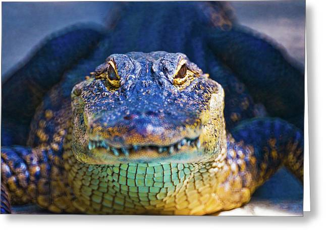 Close-up Of An Alligator Greeting Card
