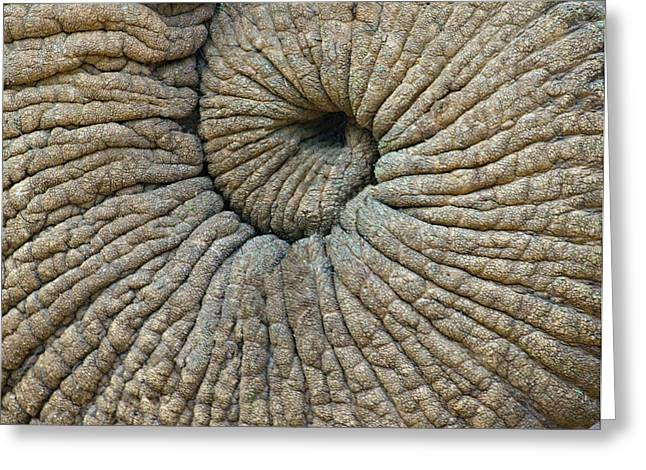 Close-up Of An Elephant Trunk Greeting Card by Panoramic Images