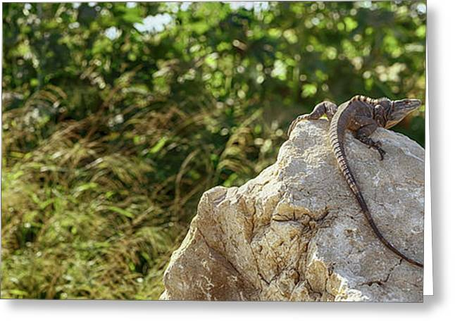 Close-up Of An Iguana, Costa Rica Greeting Card