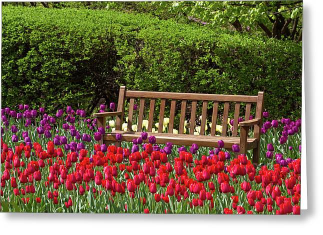 Close-up Of Bench In Bed Of Tulips Greeting Card by Panoramic Images