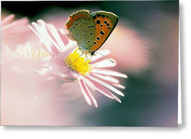 Close Up Of Butterfly On Flower Greeting Card by Panoramic Images