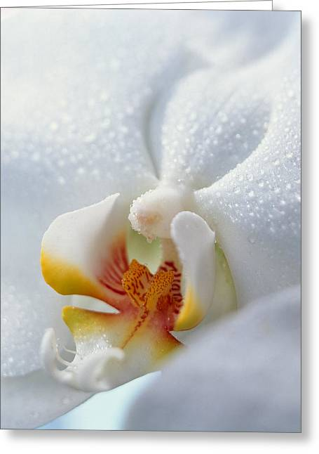 Close Up Of Center Of White Orchid Greeting Card