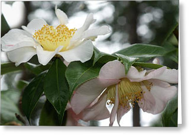 Close-up Of Details Of Camellia Flowers Greeting Card by Panoramic Images