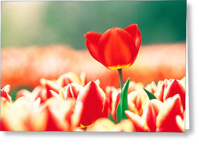 Close Up Of Flower Head Rising From Greeting Card