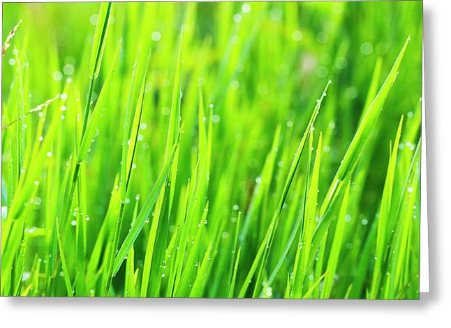 Close Up Of Fresh Grass With Water Greeting Card by Design Pics Vibe