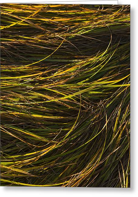 Close Up Of Grass Along Womens Bay Greeting Card by Kevin Smith