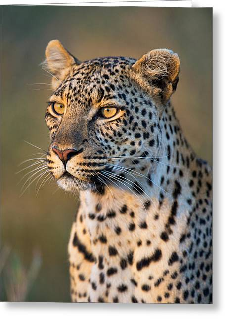 Close-up Of Leopard Panthera Pardus Greeting Card by Panoramic Images
