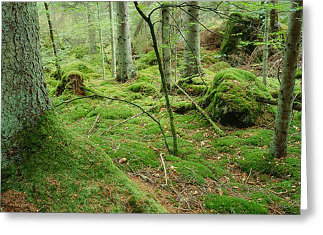 Close-up Of Moss On A Tree Trunk Greeting Card by Panoramic Images