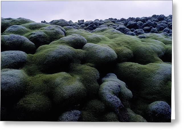 Close-up Of Moss On Rocks, Iceland Greeting Card