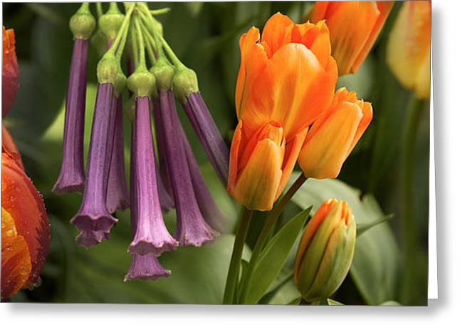 Close-up Of Orange And Purple Flowers Greeting Card by Panoramic Images