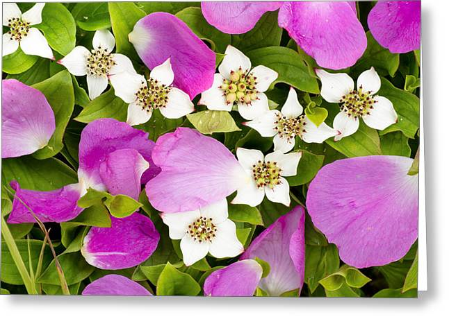 Close Up Of Prickly Rose Petals And Greeting Card by Carl R. Battreall