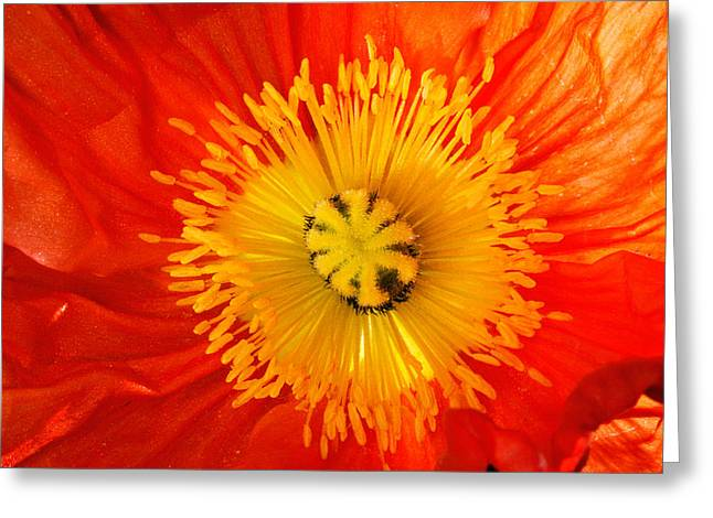 Bold Blossom Greeting Cards - Close Up Of Red And Yellow Flower Greeting Card by Panoramic Images