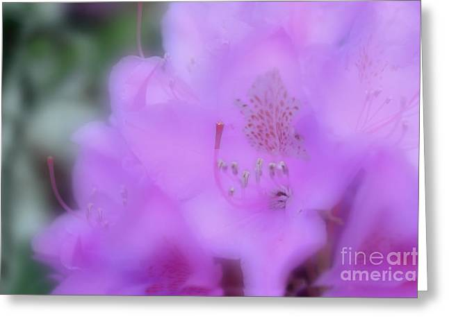 Close Up Of Rhododendron Flower Greeting Card by Dan Friend