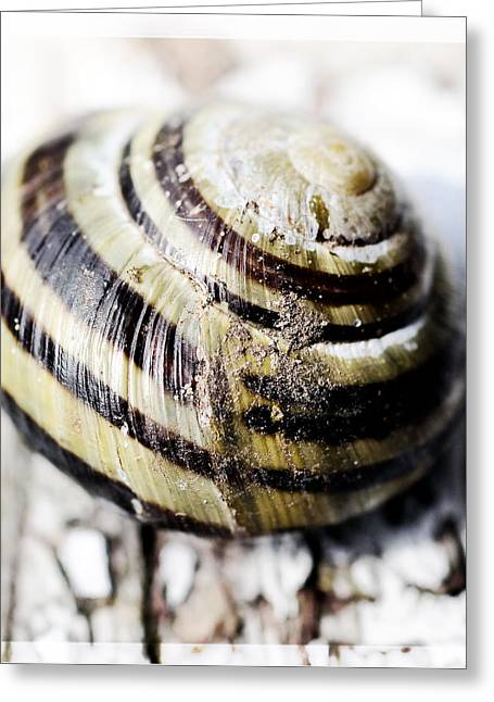 Close Up Of Sea Shell Greeting Card