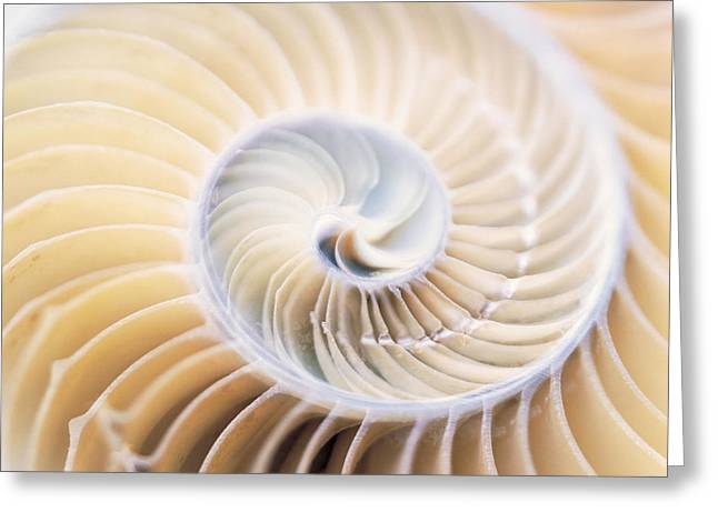Close Up Of Shell Greeting Card