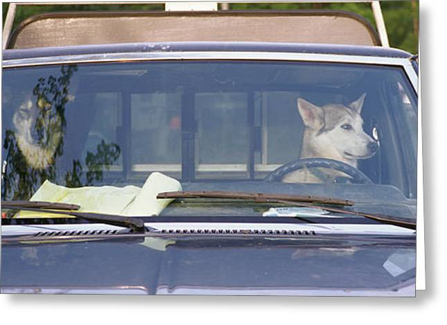 Close-up Of Two Dogs In A Pick-up Greeting Card by Panoramic Images
