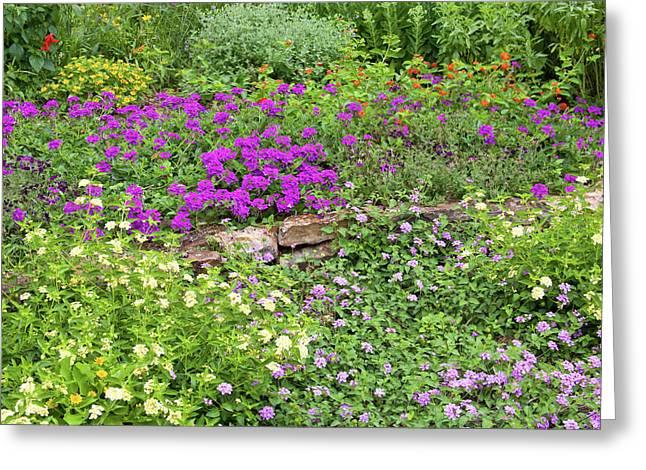 Close-up Of Various Lantana Flowers Greeting Card