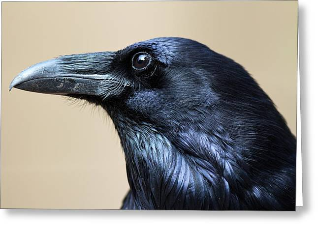 Close Up Portrait Of A Common Raven Greeting Card by Marc Moritsch