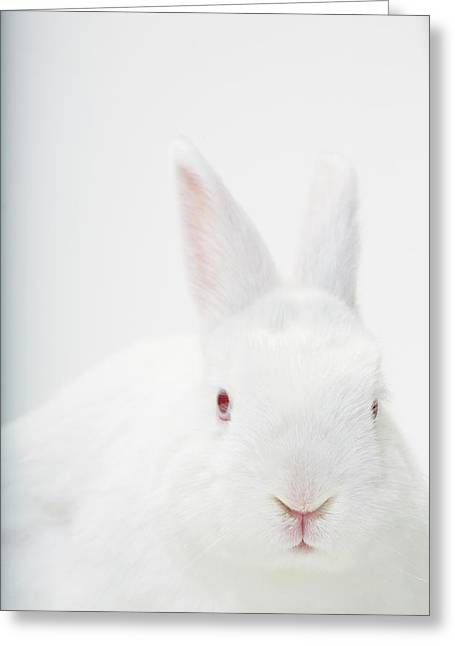 Close Up Portrait Of A White Domestic Greeting Card by Rebecca Hale