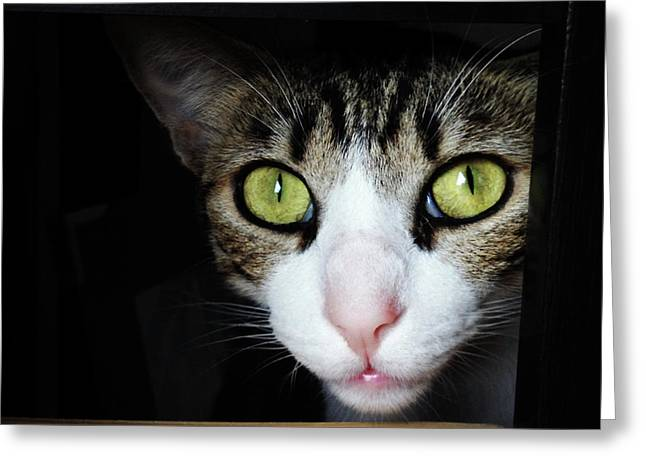 Close Up Portrait Of Beautiful Cat Greeting Card