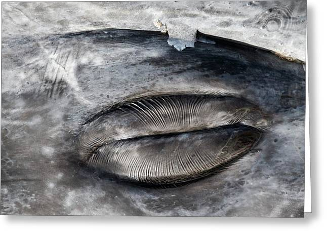 Closed Grey Whale Eye Greeting Card by Christopher Swann